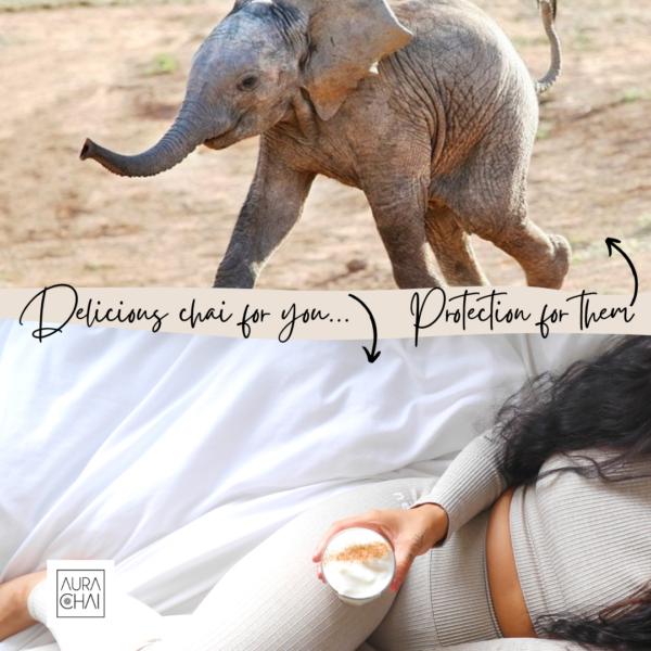 Copy of elephants chai